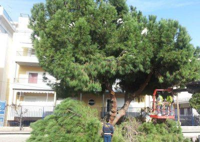Εργασία 1η κλαδέματος υψηλού δέντρου | Dasikosxartis.gr