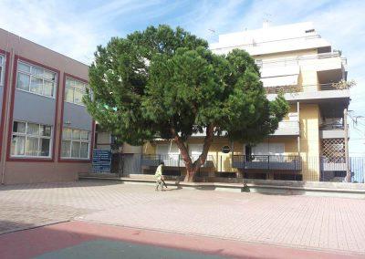 Τελική εικόνα κλαδέματος υψηλού δέντρου | Dasikosxartis.gr