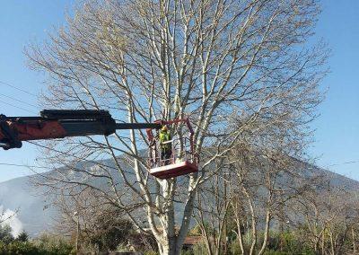 Αρχική εικόνα κλαδέματος υψηλού δέντρου | Dasikosxartis.gr