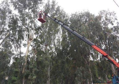 Εικόνα εργασίας κλαδέματος υψηλού δέντρου | Dasikosxartis.gr