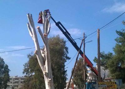 Τελική εικόνα εργασίας κλαδέματος υψηλού δέντρου | Dasikosxartis.gr