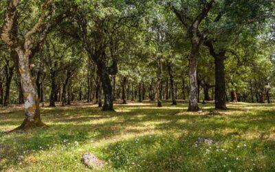 Ανάρτηση του Δασικού Χάρτη Βοιωτίας για Υποβολή Αντιρρήσεων